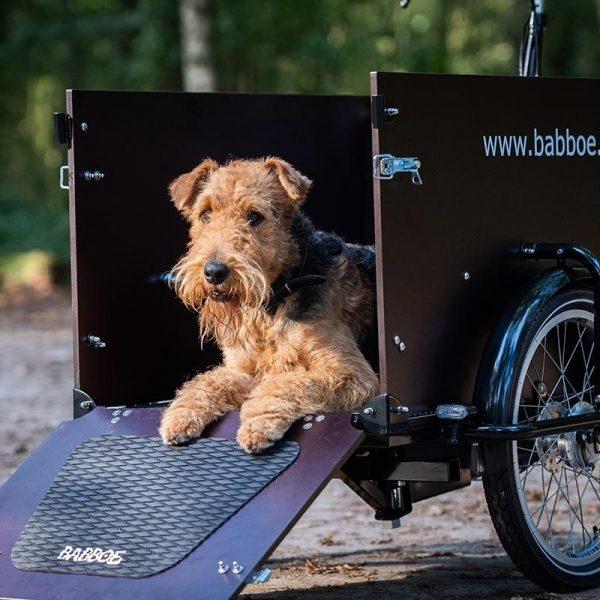 BABBOE DOG DARK BROWN